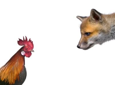 fox henhouse research plagiarism
