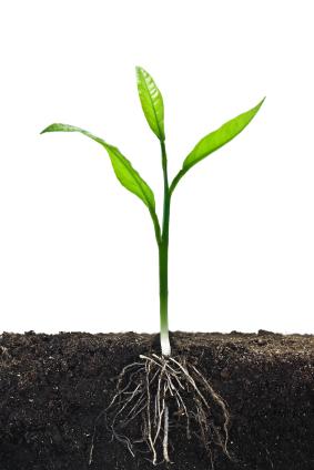 tree roots plagiarism