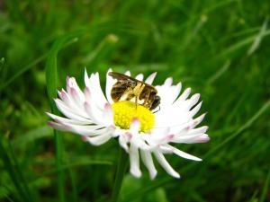 content pollenation